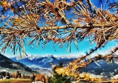 wpid herbst4 400x284 - Herbst in Tirol